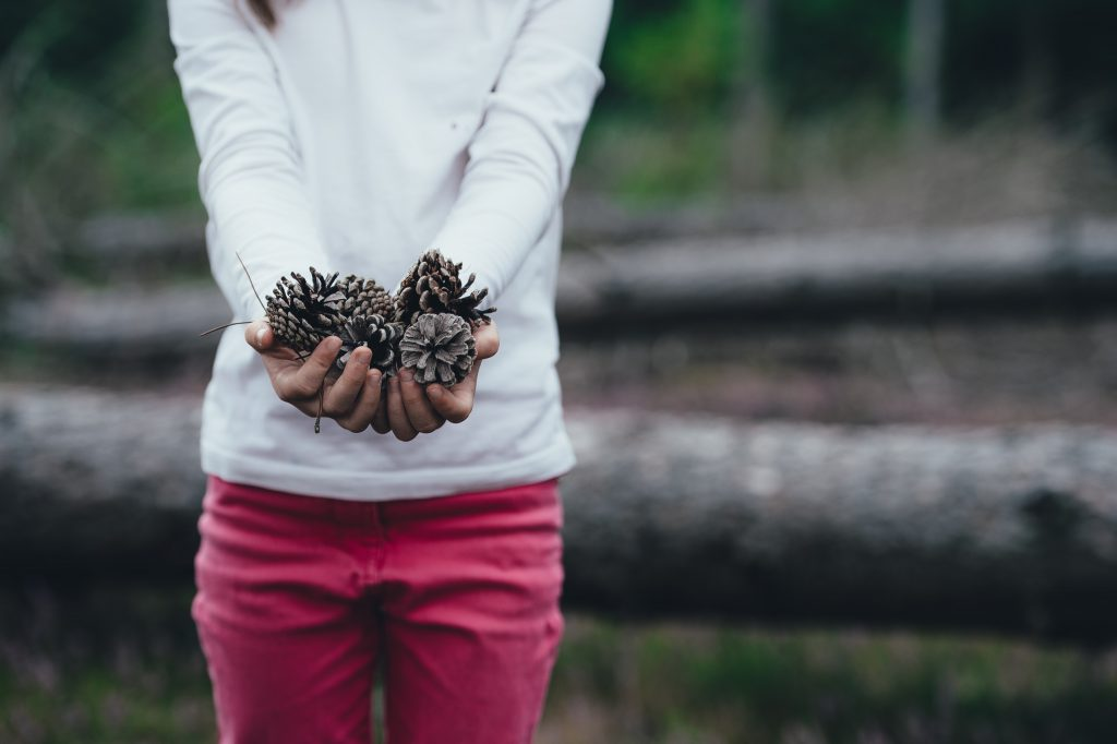 A child holds a collection of pinecones